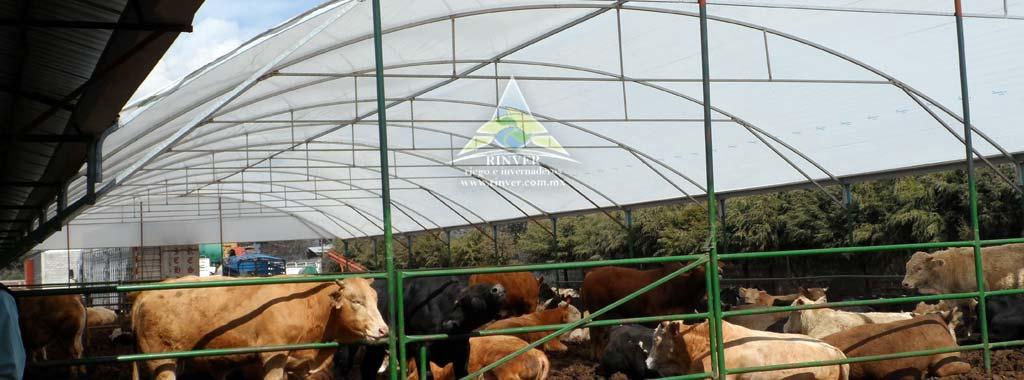 Cobertizos para bovinos for Cobertizo plastico